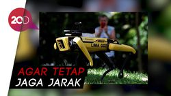 Singapura Kerahkan Robot Anjing untuk Awasi Warganya