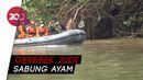 3 Warga Hilang di Sungai Polman Usai Hindari Polisi