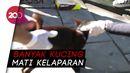 Saat Cat Lovers Bergerak Selamatkan Kucing Liar di Tengah Pandemi