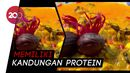 Bia Paniki, Kuliner Khas Maluku yang Menyehatkan