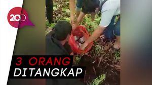 Terbongkar! Jaringan Narkoba Kepri-Riau Kubur Sabu 7 Kg di Kebun