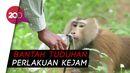 Thailand Bantah Eksploitasi Monyet di Perkebunan Kelapa