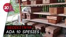 Kampung Madu Ciamis, Semua Warganya Budidaya Lebah