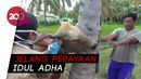 Antisipasi Antraks, Hewan Kurban di Gorontalo Dicek Kesehatannya
