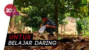 Siswa SD Rela Pungut Cengkeh Demi Kuota Internet