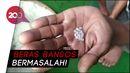Duh! Warga Cianjur Temukan Butiran Plastik dalam Beras Bansos