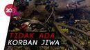 Duh... Pohon Tumbang Timpa 8 Motor Ojol di Bogor