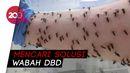 Merinding! Video Tangan Ilmuwan Dikeroyok Ratusan Nyamuk DBD