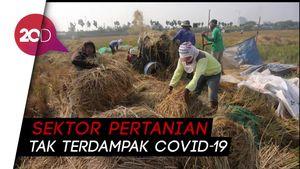 Mentan Syahrul: Pertanian Berkontribusi 16,4% Terhadap Ekonomi RI