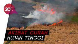 La Nina Mengurangi Potensi Kebakaran Hutan Tahun Ini