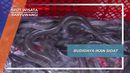Budidaya Ikan Sidat, Banyuwangi