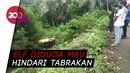 Elf Jurusan Ciamis-Cirebon Terjun ke Jurang, 1 Penumpang Tewas!