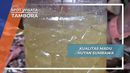 Mengenal Kualitas Madu Hutan Sumbawa dari Siklus Cuaca, Tambora, Nusa Tenggara Barat