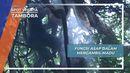 Asap dari Daun Basah, Media Untuk Mengusir Lebah dari Sarangnya, Tambora, Nusa Tenggara Barat