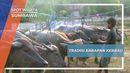 Tradisi Barapan Kerbau, Si Gendut Yang Jago Berlari Desa Marunge Sumbawa