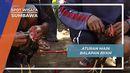 Aturan Main Barapan Ayam ala Desa Alas Sumbawa