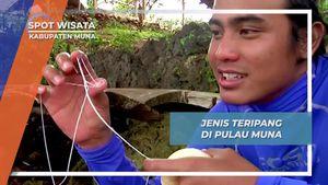 Sebelum Mencicipi Teripang Mentah dari Laut Dalam Pulau Muna Sulawesi Tenggara