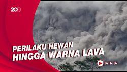 Tanda-tanda Gunung Akan Meletus yang Bisa Dilihat Mata Masyarakat