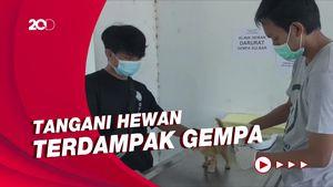 Relawan-PDHI Buka Klinik Hewan Darurat di Mamuju