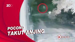 Terekam CCTV! Detik-detik Pocong Dikejar Anjing di Sulsel