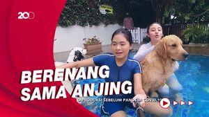 Celebrity on Vacation: Main Bersama Anjing di Taman Guguk