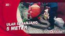 Petugas Damkar Evakuasi Ular Sanca di Pasar Rebo
