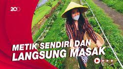 Celebrity on Vacation: Mengunjungi Kebun Stroberi dan Sayuran di Malang