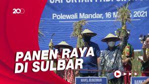 Wagub Sulbar: Sektor Pertanian di Sulbar Tumbuh Positif Saat Pandemi