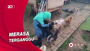 Intip Shelter Anjing Milik Wanita Bercadar yang Sempat Digeruduk Warga