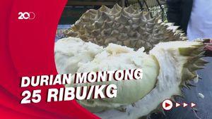 Menikmati Durian di Kappung Ihing Sulawesi Barat