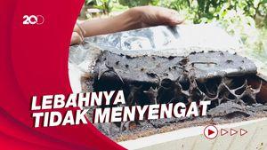 Cari Inspirasi Wisata Lebaran? Coba Jajal Ternak Madu di Jakarta Ini