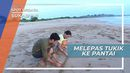 Melepas Tukik ke Pantai, Kawasan Konservasi Sukabumi Jawa Barat