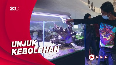 Keseruan Para Master Merakit Langsung Aquascape di TSM Cibubur