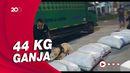 BNNP Bali Gagalkan Pengiriman 44 Kg Ganja dari Medan