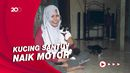 Gemes! Kucing Ini Santuy Banget, Naik Motor-Pakai Kacamata
