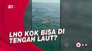 TNI AL Selamatkan Bocah yang Terombang-ambing di Tengah Laut