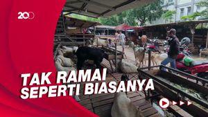 Suasana Pasar Kambing Tanah Abang Jelang Idul Adha