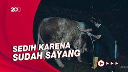 Cerita Atta-Aurel Menyembelih Grandung, Sapi Kurban Seberat 1,4 Ton!