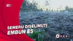 Saat Kaki Gunung Semeru Berselimut Embun Es