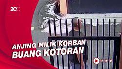 CCTV Cekcok 2 Pria Berujung Kematian Gegara Kotoran Anjing