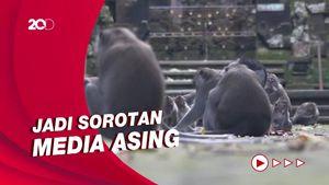 Penampakan Monyet-monyet yang Kelaparan di Bali Serbu Rumah Warga
