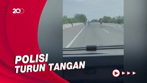 Viral! Geng ABG Pungli-Lempari Mobil di Pintu Tol Belawan