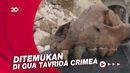 Melihat Tengkorak Hyena Raksasa yang Punah 400 Juta Tahun Lalu