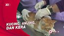 Puluhan Hewan Peliharaan di Lumajang Jalani Vaksinasi Rabies