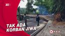 Pohon Setinggi 20 Meter Tumbang hingga Tutup Jalan Tamansari Bandung