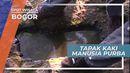 Tapak Kaki Kabayan, Ceruk Batu Berupa Tapak Kaki Manusia Purba di Gunung Munara Bogor