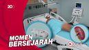 Perdana! AS Sukses Transplantasi Ginjal Babi ke Manusia
