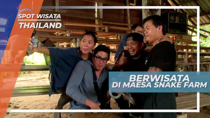 Menegangkan! Melihat Atraksi Ular di Maesa Snake Farm Thailand