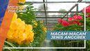 Cantiknya Warna-warni Bunga di Kawasan Wisata Taman Anggrek Thailand